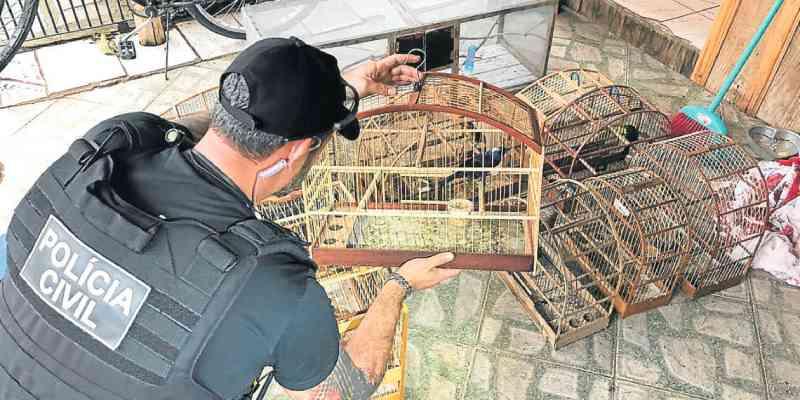 Polícia cumpre mandado por tráfico e descobre cativeiro de aves silvestres, em Sapiranga, RS