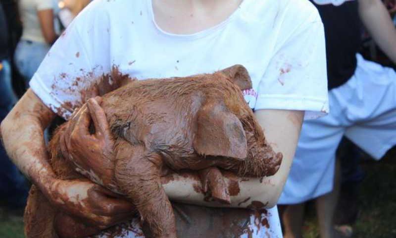 Pega do porco na lama foi proibida pela justiça. (Foto: Jornal Repercussão)