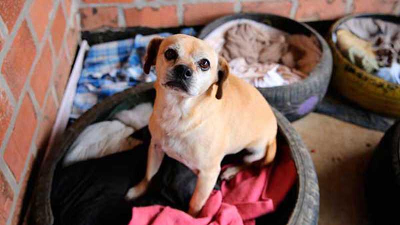 Campanha do Agasalho Pet recebe primeiras caminhas e cobertores em Farroupilha, RS