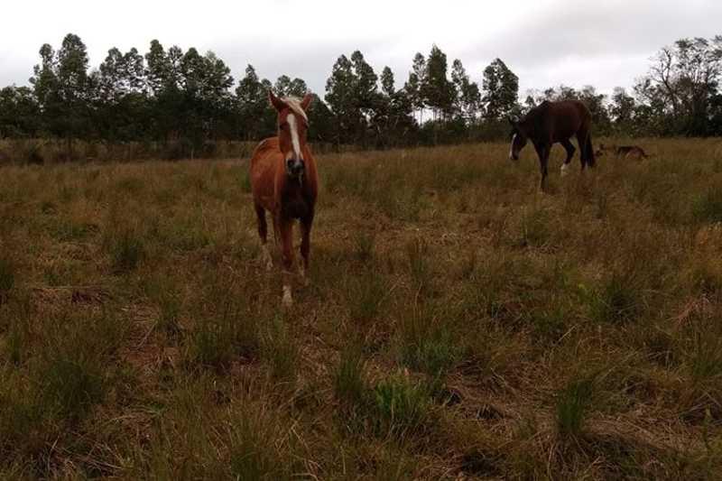 Animal estava em campo quando desapareceu - Foto: Reprodução