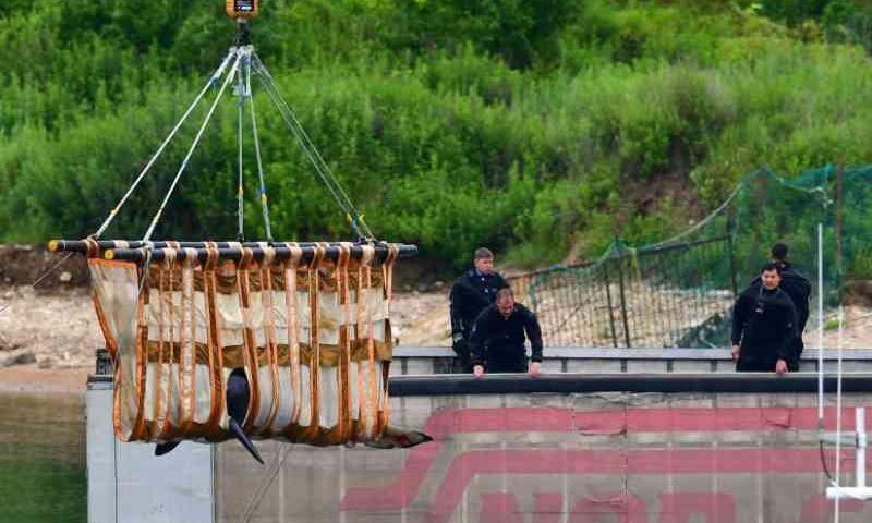 Últimas orcas em cativeiro em pequenos tanques na Rússia são libertadas