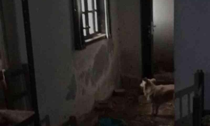 Vídeo: animais trancados em casa há mais de um ano são salvos no litoral de SC