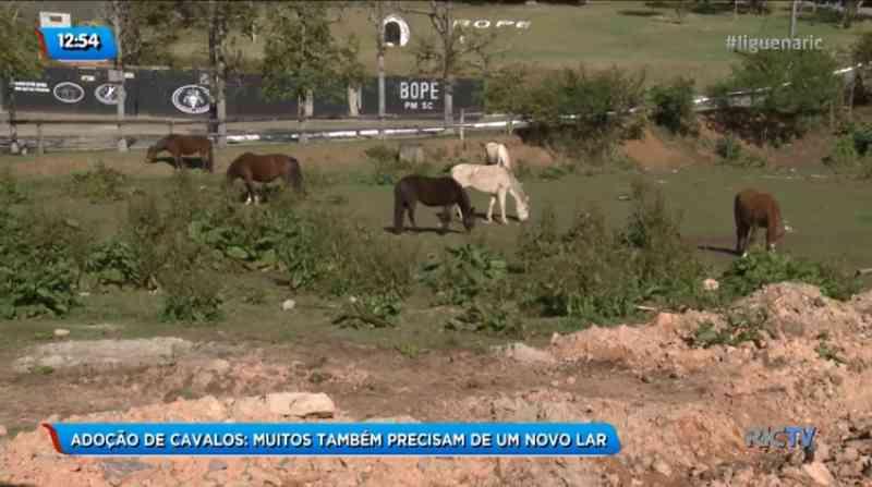 Cavalos esperam adoção consciente em São José, SC
