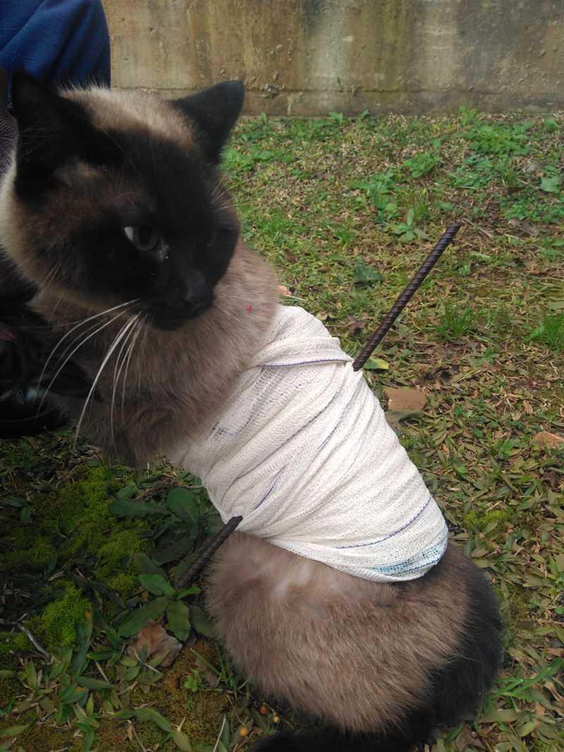 Gato sobrevive após cair sobre lança de ferro; bombeiros fizeram o resgate