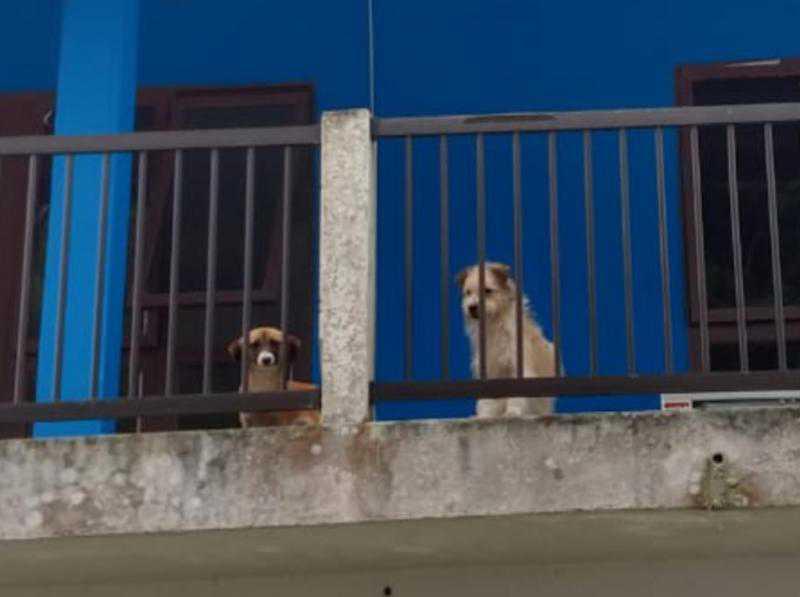 Animais ficaram cerca de 15 dias abandonados   Divulgação Polícia Civil