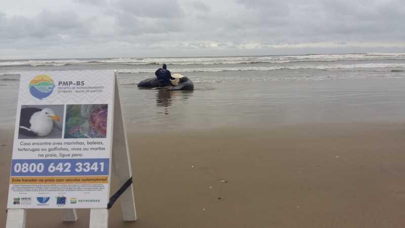 Animal ficou encalhado na Praia do Sol — Foto: PMP-BS/ Udesc