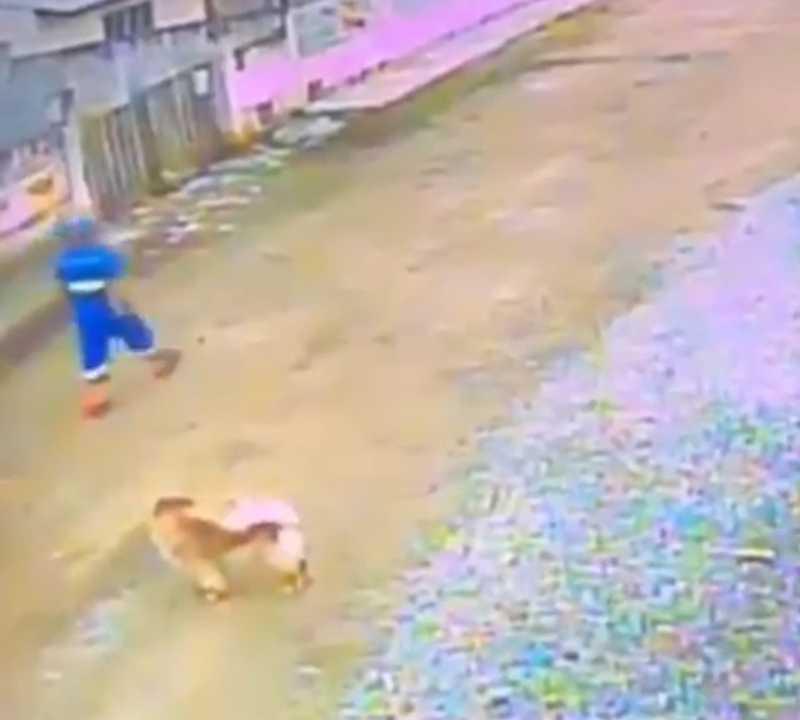 Câmeras de segurança flagraram o momento que o cachorro foi morto. – Divulgação/ND