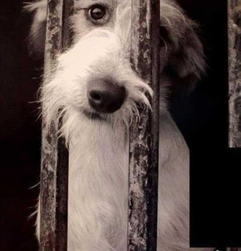 Cachorros e cavalos são encontrados com sinais de maus-tratos em Rio do Sul, SC
