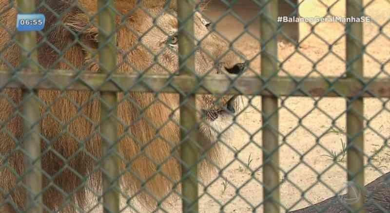Deputada apresenta projeto de fechamento do zoológico de Aracaju, SE