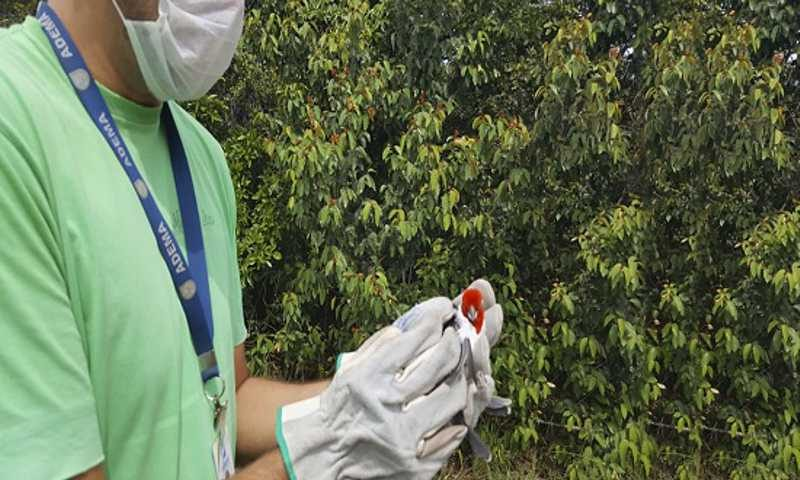 Os procedimentos são realizados pelos profissionais do órgão ambiental após o recebimento de denúncias e informações por parte da população através de ligações telefônicas (Foto: Adema)