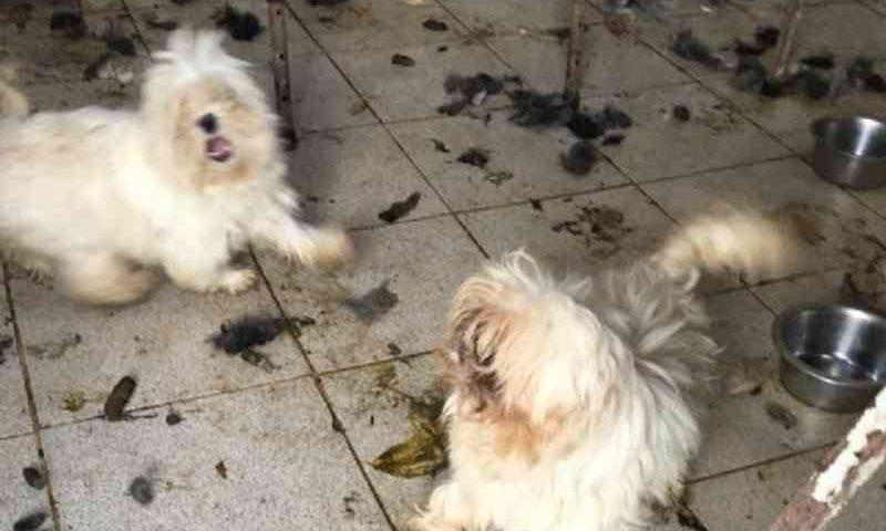 Mais de 50 cães e gatos são resgatados após denúncias de maus-tratos