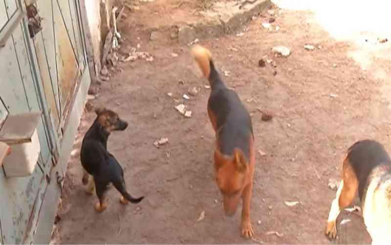 Comerciante socorre cães abandonados sem comida e água em Ferraz de Vasconcelos, SP