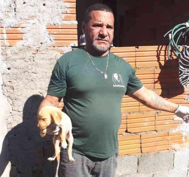 Dezesseis cães são resgatados durante ação contra maus-tratos em Guarujá, SP