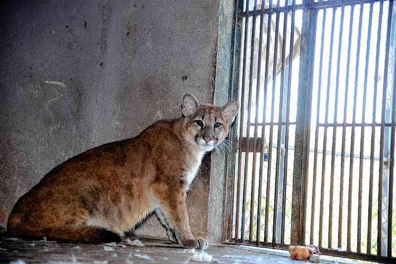 'Órfãos' das queimadas, animais silvestres chegam à Associação Mata Ciliar, em Jundiaí, SP