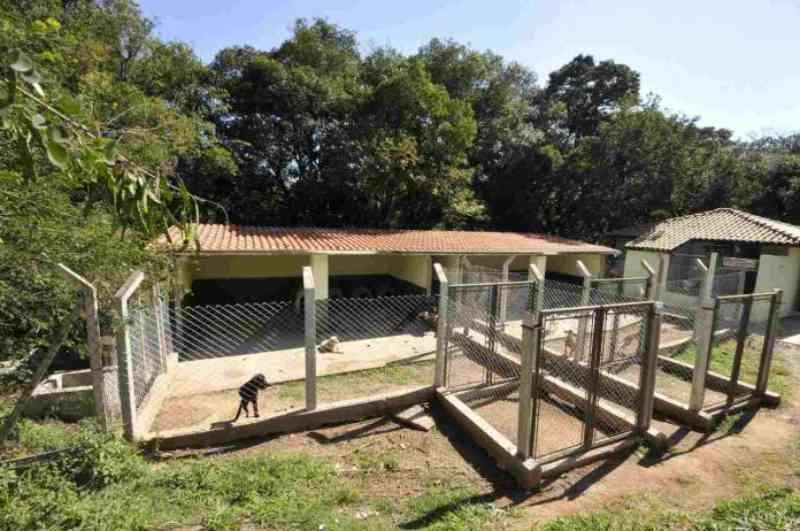 Prefeitura de Jundiaí (SP) nega hospital pet e prioriza NOVA SEDE do Debea