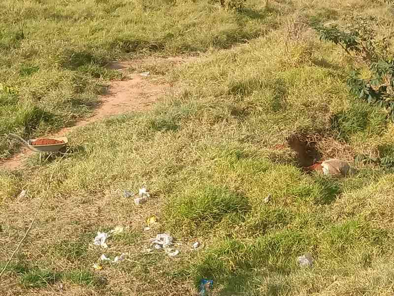 ONG faz nota de repúdio após morte de cavalo a marretadas em Limeira, SP
