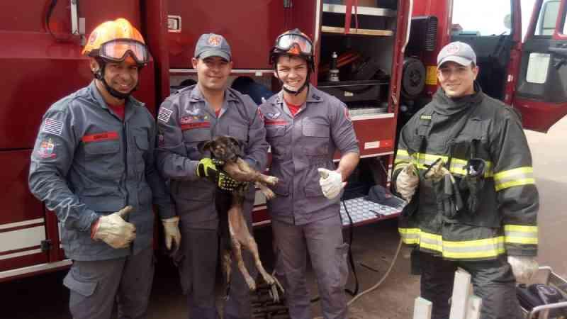 Cadela é resgatada por bombeiros após cair em galeria pluvial com mais de dois metros de profundidade