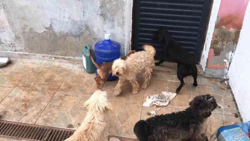 Cães e gatos em situação de maus-tratos são retirados de casa em Salto, SP