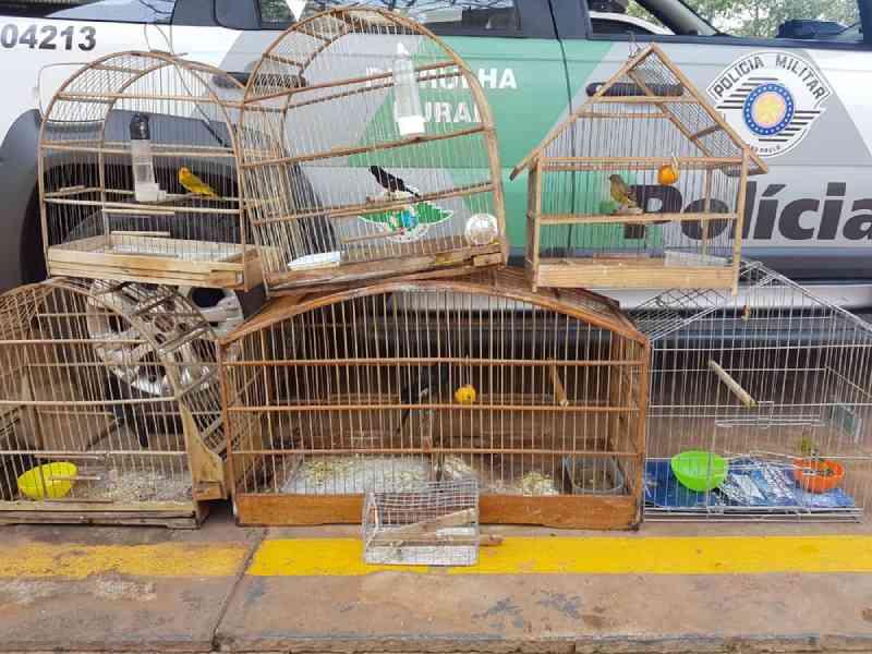 Pedreiro é multado por manter aves em cativeiro em Votuporanga, SP