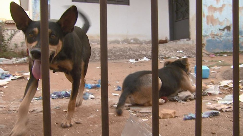 A dona de casa Fabiana da Motta Gimenez alimenta cães abandonados em casa em Araraquara — Foto: Paulo Chiari/EPTV