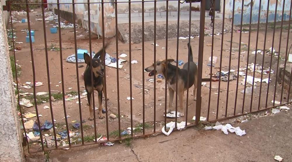 Cães vivem trancados em meio à sujeira em casa de Araraquara — Foto: Paulo Chiari/EPTV
