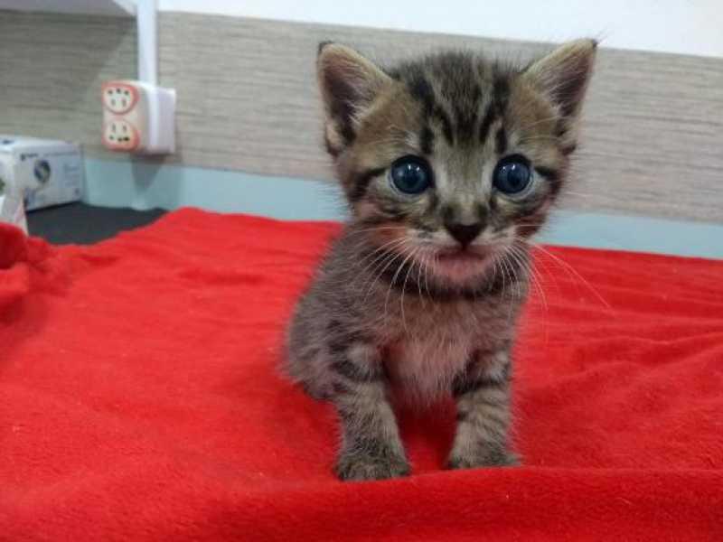 Filhote de gato no CCZ de Bauru