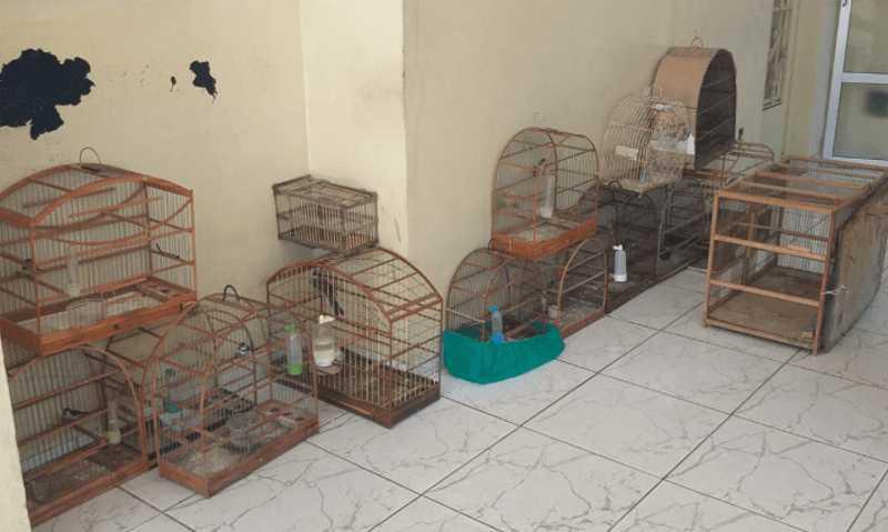 Mais de 20 pássaros silvestres apreendidos na 1ª semana de agosto em Bragança Paulista, SP