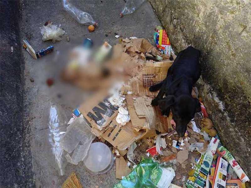 Agentes enfrentaram dificuldades para regastar o animal. Foto: Guarda Civil