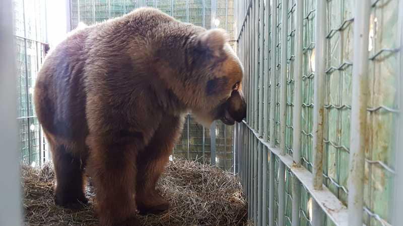 Ursos chegam a santuário ecológico em Joanópolis — Foto: Fotos: Biga Pessoa/ Rancho dos Gnomos