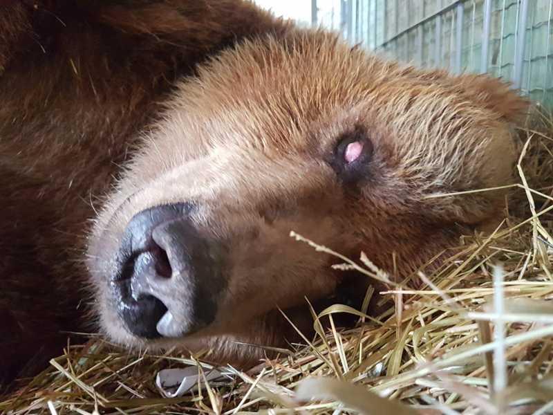 Os dois ursos chegaram por volta de 12h30 desta sexta-feira (30) — Foto: Biga Pessoa/ Rancho dos Gnomos