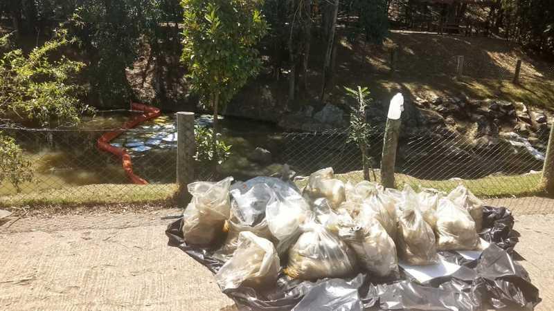 Óleo vegetal está sendo retirado do lago do parque em Jundiaí — Foto: Lísias Sena/TV TEM