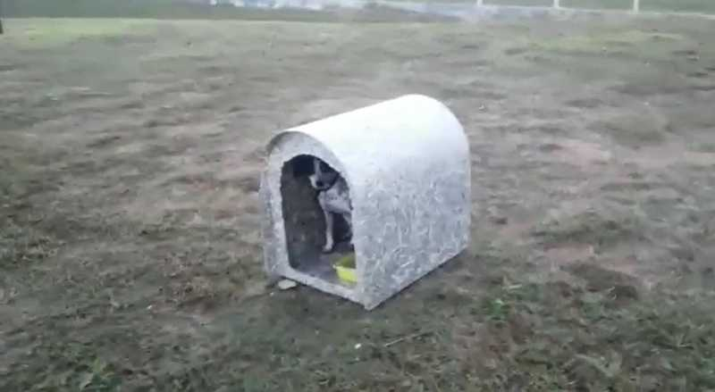 Motorista adota cachorra abandonada em trevo de Matão e se emociona: 'não tem explicação' — Foto: Osmar Aparecido Fabre/Arquivo pessoal