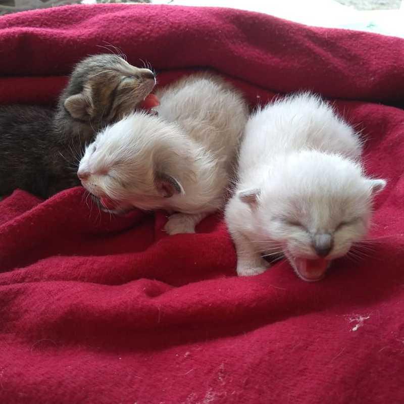 Gatinhos nasceram em julho, em Peruíbe — Foto: Graziella Judy