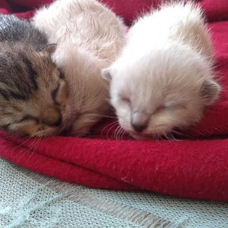 Gatinhos perderam a mãe, que envenenada em Peruíbe — Foto: Graziella Judy