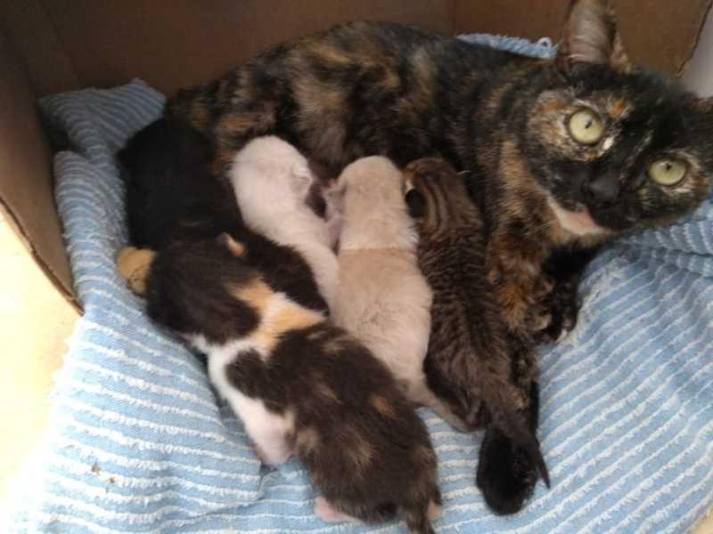 Gata 'mãe de leite' amamenta os filhotinhos órfãos — Foto: Graziella Judy