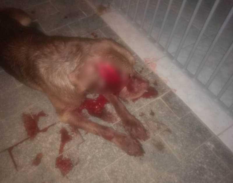 Cachorro ficou gravemente ferido na cabeça após ser agredido com uma espada em Praia Grande, SP — Foto: Reprodução/Praia Grande Mil Grau