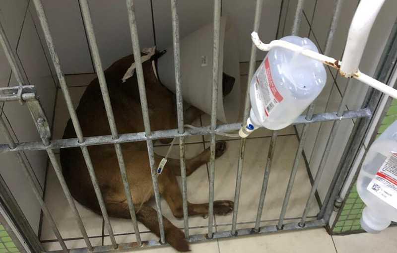 Bruce segue internado em uma clínica veterinária em Praia Grande (SP) — Foto: Arquivo Pessoal