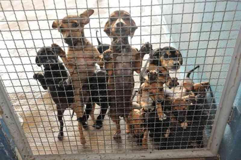 Prefeitura de São Paulo diz que programa de passeio com cães não será extinto