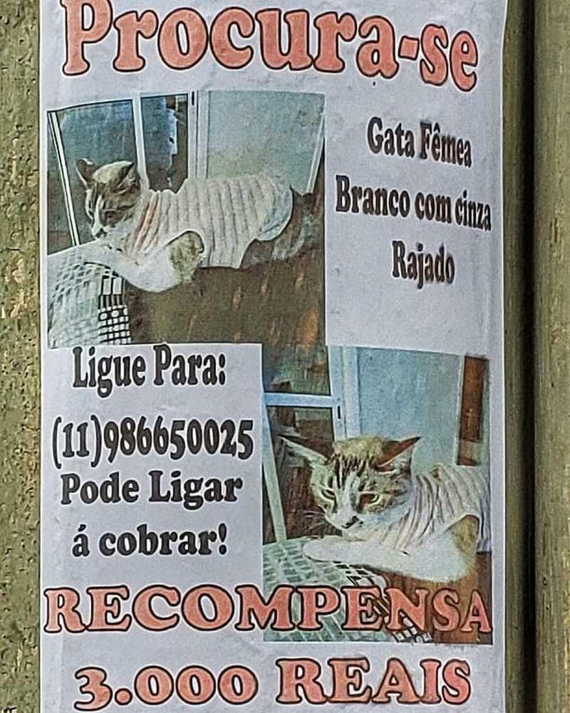 Tutora mobiliza web e espalha mais de 600 cartazes por São José em busca de gato desaparecido — Foto: Arquivo Pessoal