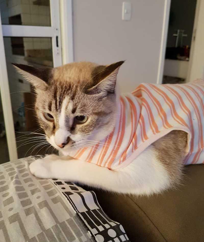 Gatinha está desaparecida há um mês e meio. — Foto: Arquivo Pessoal/Marlene Berti