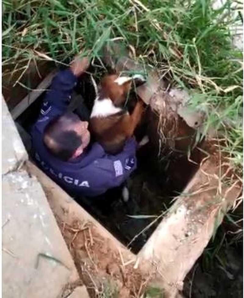 Cachorro é resgatado por PM em Sorocaba — Foto: Reprodução/TV TEM