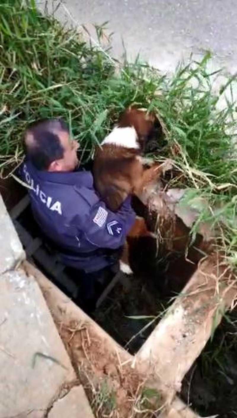 Cachorro é resgatado por policial após cair em boca-de-lobo em Sorocaba, SP; vídeo