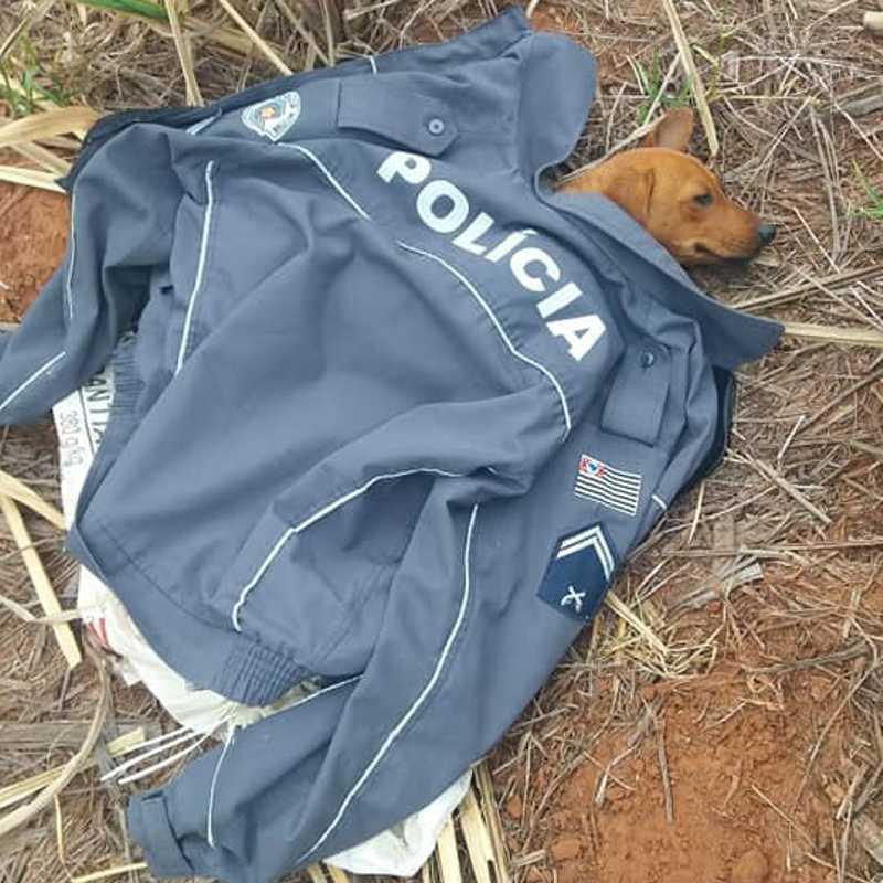 Sensibilizado, policial militar tirou o casaco para proteger a cadela, que depois foi adotada por cabo da PM (Foto: Cedida/PM).