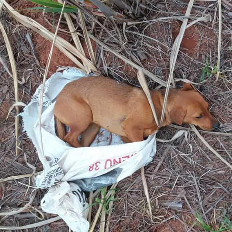 Cadela foi encontrada abandonada, dentro de uma sacola (Foto: Cedida/PM).