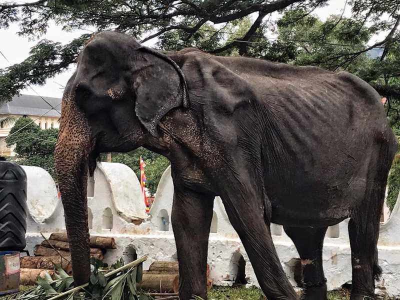 Foto: Save Elephant Foundation