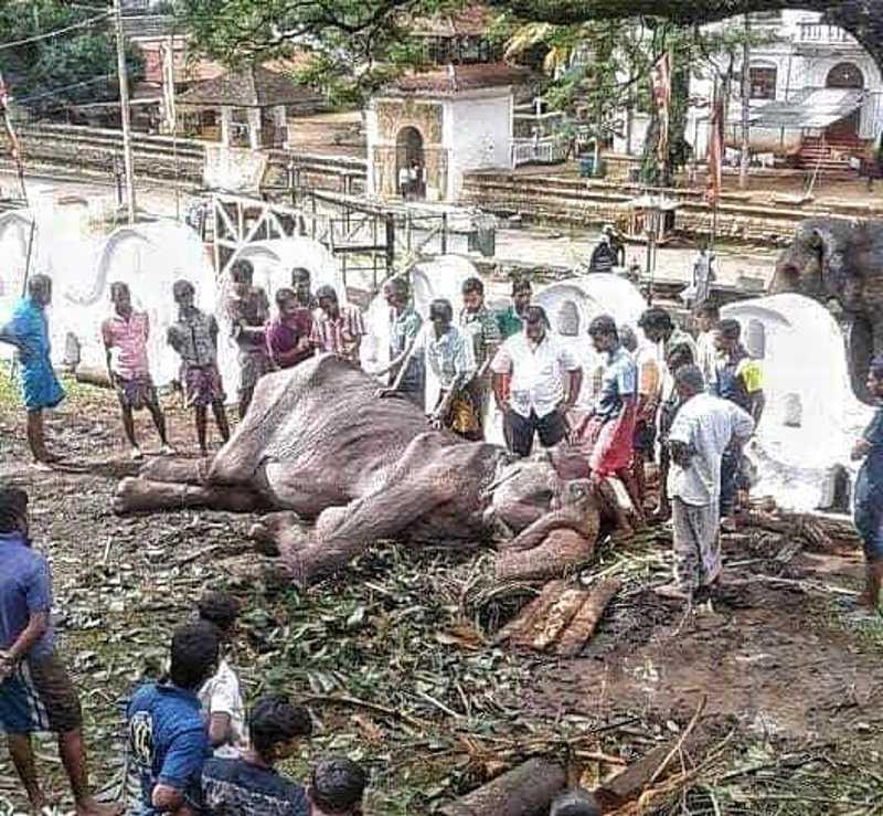 Fotos: Save Elephant Foundation