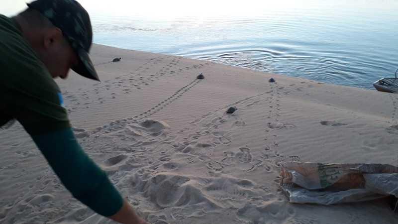 Policia Ambiental e Naturatins soltam tartarugas após abordagem de pesca ilegal em Caseara — Foto: Divulgação/PM Ambiental