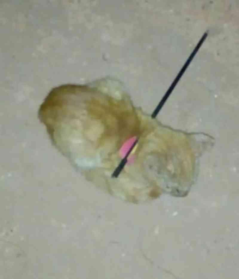 Gato é resgatado após ser encontrado com flecha atravessada nas costas em Palmas, TO