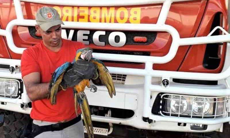 Arara-canindé ferida é resgatada pelo Corpo de Bombeiros em Paraíso do Tocantins