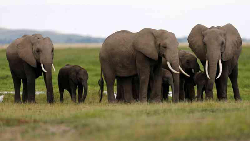 'Vitória histórica'. Venda de elefantes selvagens a zoos está perto de ser proibida